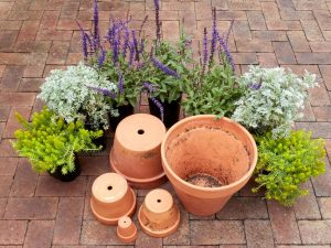 4 Pointers When Choosing Which Pots To Use For Your Plants