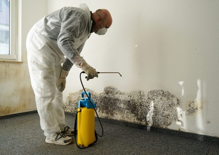 Mold Removal Should Be aTop Priority